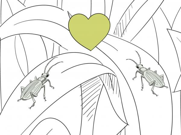 <span>Pflanzenschutz mit der Natur</span><i>→</i>